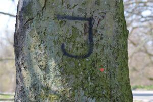 Szok! Nienawiść na drzewach. Czekamy na reakcję właściwych służb miasta i policji.